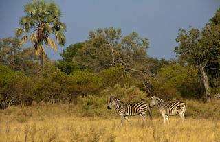 Game viewing at Delta Camp