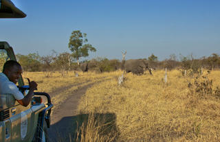 Daily game drives through the Chobe and Savuti