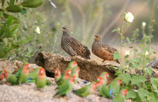 Erongo Wilderness Lodge - Birding